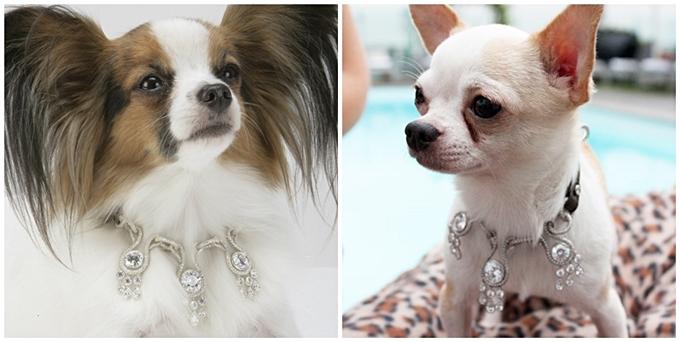 I-love-dog-diamond-amour-2-horz